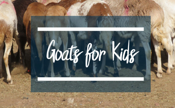 goats4kids square