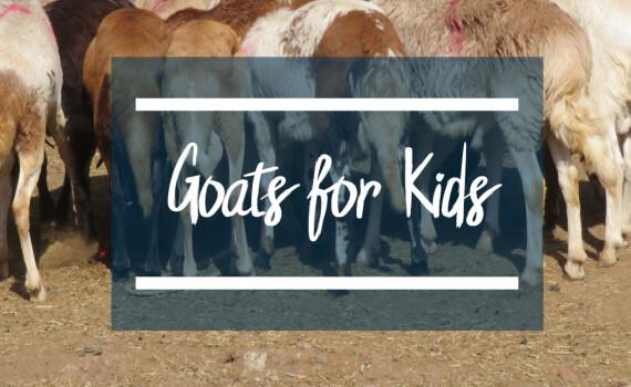goats4kids square
